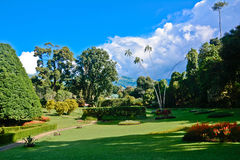 Jardim botânico real, Peradeniya Sri Lanka Fotografia de Stock