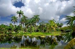 Jardim botânico tropical de Fairchild fotografia de stock royalty free