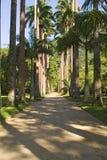 Jardim Botânico Stock Images