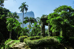 Jardim Botanico, Rio de Janeiro arkivbild