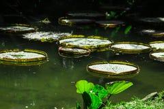 Jardim Botanico, Rio de Janeiro stock image