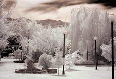 Jardim branco foto de stock royalty free
