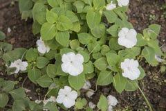 Jardim branco original fotos de stock
