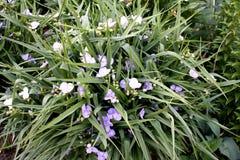 Jardim Campo do jardim Florescência da mola Fotografia de Stock