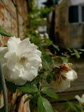 Jardim Cobham da medicina Fotos de Stock Royalty Free