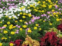 Jardim colorido Foto de Stock Royalty Free