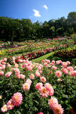 Jardim colorido em Mae Fah Luang, Chiang Rai, Tailândia Imagens de Stock Royalty Free