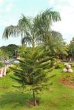 Jardim com árvores Fotografia de Stock
