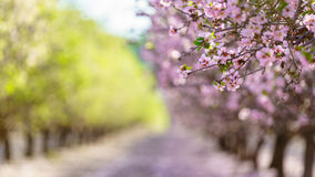 Jardim com as árvores de fruto de florescência imagem de stock royalty free