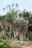 Jardim com cactos Imagem de Stock