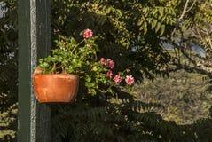 Jardim com flores fotografia de stock