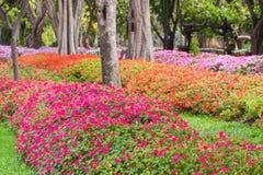 Jardim com flores Imagem de Stock Royalty Free