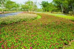 Jardim com flores Fotos de Stock Royalty Free