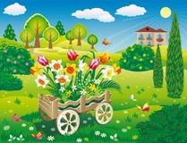 Jardim com o carrinho de m?o decorativo do jardim com as flores bonitas dos narcisos amarelos ilustração do vetor