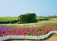 Jardim com os copos feitos da planta foto de stock