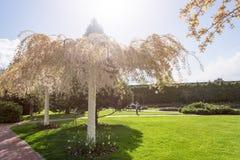 Jardim com paisagem do topiary Ajardinar no parque Foto de Stock Royalty Free