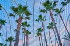 Jardim com palmeiras dentro de uma rede dos ferros que simulam folhas de palmeira foto de stock