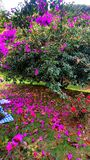 Jardim completamente das cores Fotografia de Stock