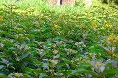 Jardim completo da folha verde Fotografia de Stock
