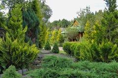 Jardim conífero com mandril foto de stock royalty free