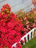 Jardim cor-de-rosa brilhante Fotos de Stock Royalty Free