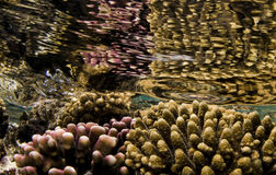 Jardim coral fotos de stock royalty free