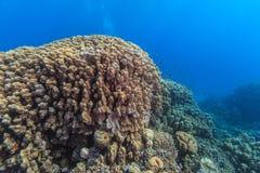 Jardim coral Fotografia de Stock
