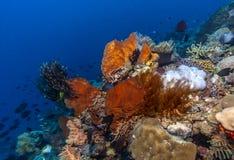 Jardim coral Bali subaquático fotos de stock royalty free