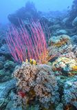 Jardim coral Bali subaquático imagem de stock