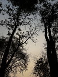 Jardim crepuscular Fotografia de Stock Royalty Free