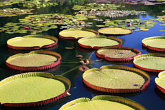 Jardim da água Fotografia de Stock Royalty Free