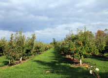 Jardim da árvore de Apple Imagens de Stock Royalty Free