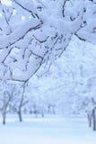 Jardim da árvore de maçã do inverno fotografia de stock royalty free