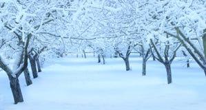 Jardim da árvore de maçã do inverno fotos de stock royalty free