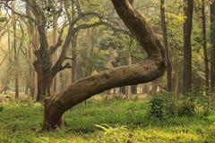 Jardim da árvore no parque de Cubbon na Índia de Bangalore Imagens de Stock Royalty Free