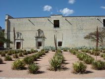 Jardim da agave Imagens de Stock Royalty Free