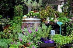 Jardim da alfazema Fotos de Stock