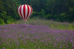 Jardim da alfazema e um balão de ar quente Fotografia de Stock Royalty Free