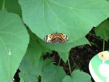 Jardim da borboleta Imagem de Stock
