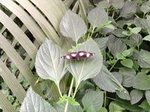 Jardim da borboleta Foto de Stock Royalty Free