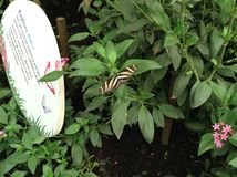 Jardim da borboleta Fotos de Stock