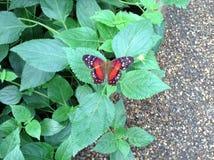 Jardim da borboleta Imagens de Stock Royalty Free