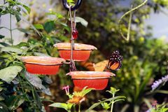 Jardim da borboleta imagem de stock royalty free