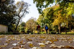 People strolling in Jardim da Estrela with fallen leaves along the way, on a sunny day royalty free stock image