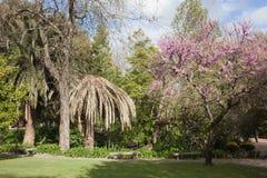 Jardim da Estrela in Lisbon. Spring in the Estrela Garden (Jardim da Estrela) in Lisbon, Portugal Royalty Free Stock Image