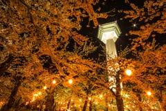 Jardim da flor de cerejeira abaixo da torre de Goryokaku imagem de stock