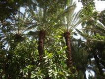 Jardim da flora de Elche do parque da palma imagens de stock royalty free
