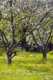 Jardim da fruta Foto de Stock