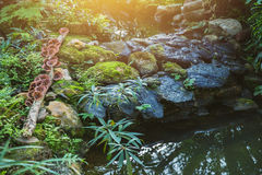 Jardim da lagoa de água da floresta tropical Imagens de Stock