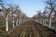 jardim da maçã na mola antes de florescer imagens de stock royalty free